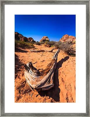 Desert Driftwood Framed Print by Jonathan Gewirtz