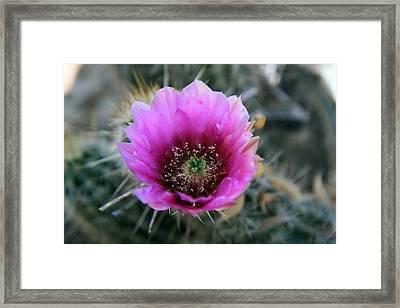 Desert Flower 1 Framed Print