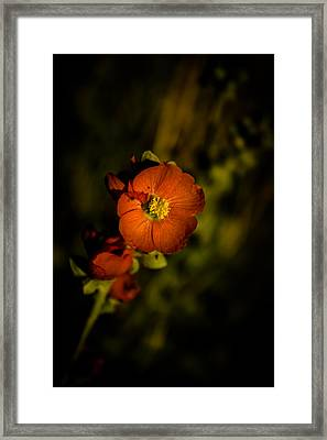 Desert Flower 2 Framed Print by Joel Loftus