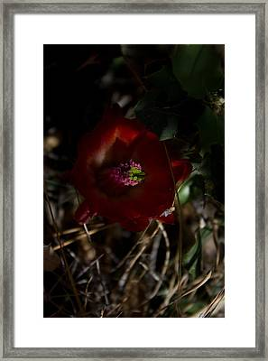 Desert Flower Framed Print by Joel Loftus