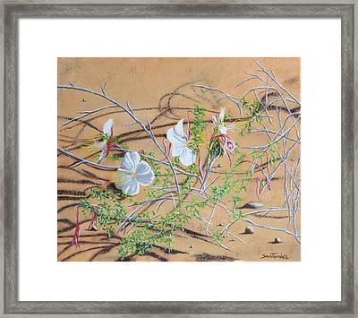 Desert Flower Framed Print by Paul Santander