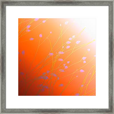 Framed Print featuring the photograph Desert Flowers by Holly Kempe