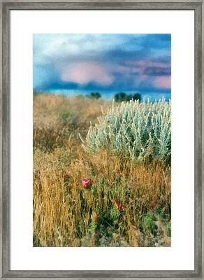 Desert Flowers Framed Print by Michelle Calkins