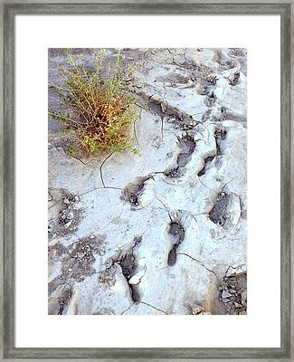 Desert Footprints Framed Print