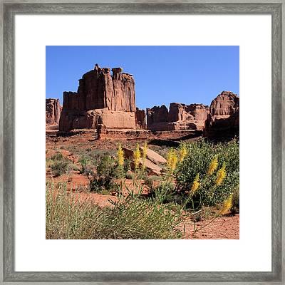 Desert Glory Framed Print by Ann Van Breemen