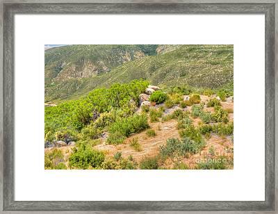 Desert Greenery Framed Print by Deborah Smolinske