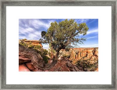 Desert Oddity Framed Print