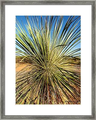 Desert Peacock Framed Print by Dick Botkin