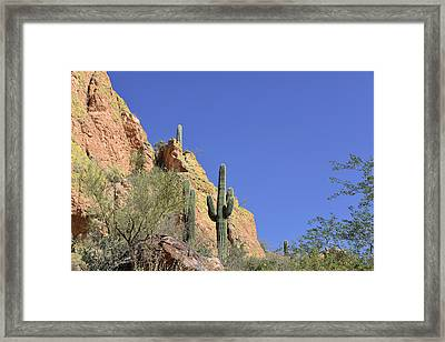 Desert Plants Of The Superstitions Framed Print by Christine Till