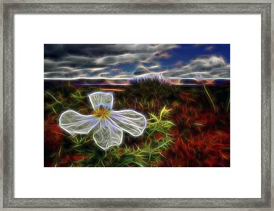 Desert Primrose 1 Framed Print by William Horden