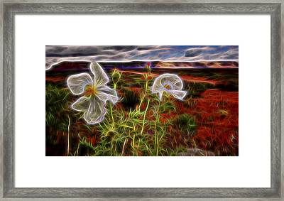 Desert Primrose 2 Framed Print by William Horden
