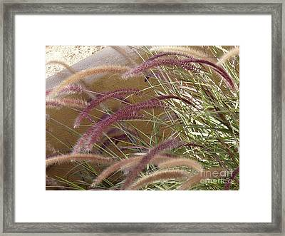 Desert Pussywillows Framed Print by Deborah Smolinske