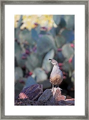 Desert Quail - Posterized Framed Print