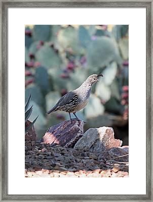 Desert Quail Framed Print