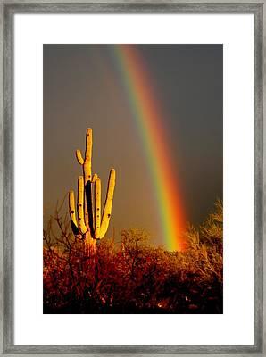 Desert Rainbow Framed Print by T C Brown
