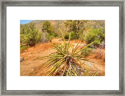 Desert Reds And Greens Framed Print by Deborah Smolinske