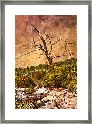 Desert Rose Framed Print by Debra and Dave Vanderlaan