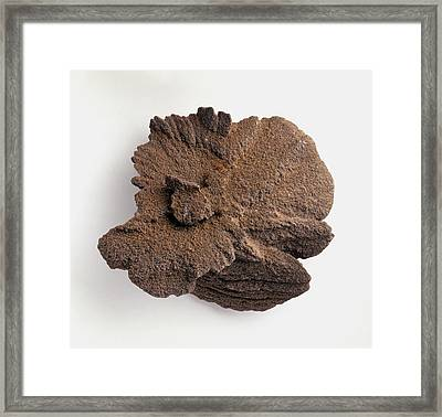 Desert Rose Framed Print by Dorling Kindersley/uig