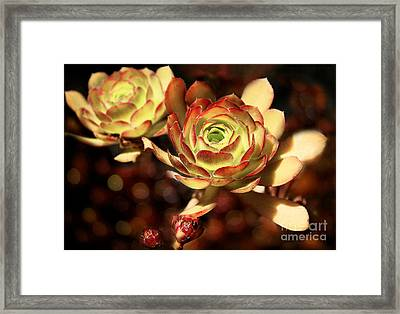 Desert Roses Framed Print by Ellen Cotton