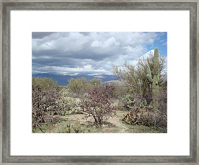 Desert Scene Framed Print
