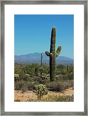 Desert Scenic IIi Framed Print
