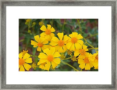 Framed Print featuring the photograph Desert Spring by David Rizzo