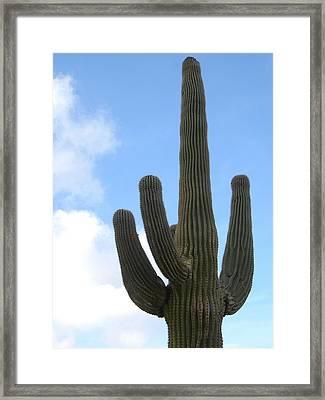 Desert Statesman Framed Print