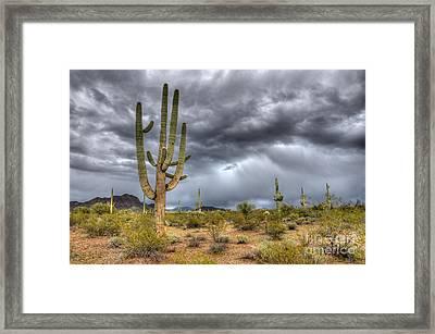 Desert Storm Arizona 2 Framed Print by Bob Christopher