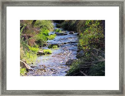 Framed Print featuring the photograph Desert Stream by David Rizzo