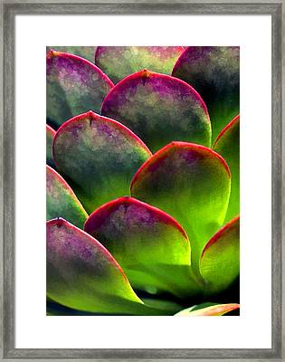 Desert Succulent In Bright Sun And Shade Framed Print by Elaine Plesser