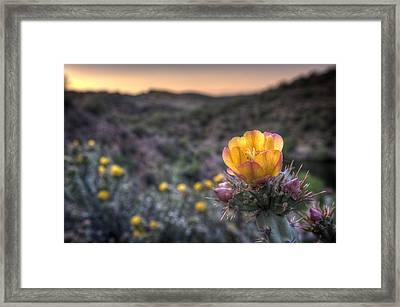 Desert Sunset Blossom Framed Print