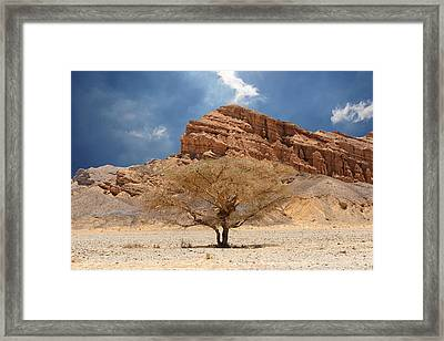 Desert Tree And Mountains Framed Print
