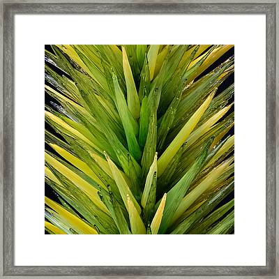 Framed Print featuring the photograph Desert Tree by Glenn DiPaola
