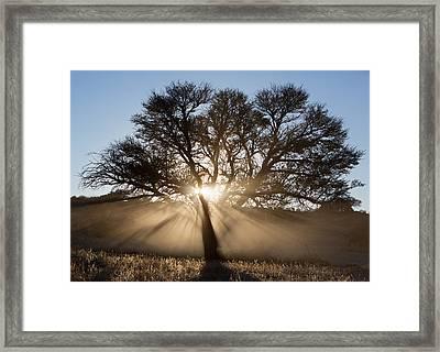 Desert Tree Framed Print by Max Waugh