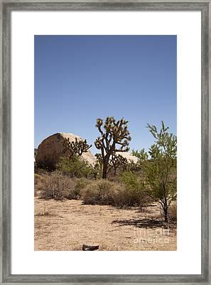 Desert Trees Framed Print by Amanda Barcon