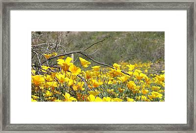 Desert Wild Flowers Framed Print