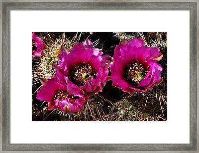 Framed Print featuring the photograph Desert Wildflower by Diane Lent
