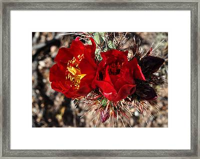 Framed Print featuring the photograph Desert Wildflowers by Diane Lent