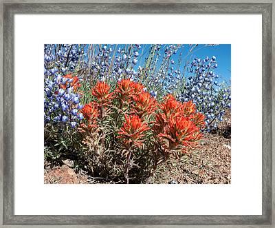 Desert Wildflowers Framed Print by Kathleen Bishop
