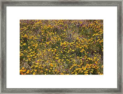 Desert Wildflowers Framed Print by Robert Ashbaugh