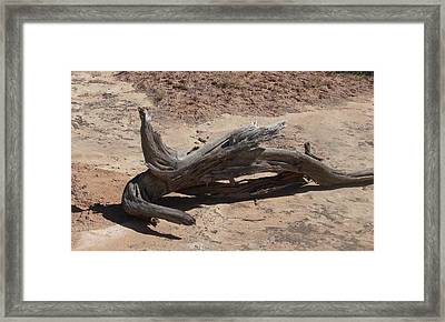 Framed Print featuring the photograph Desert Wildwood by Fortunate Findings Shirley Dickerson