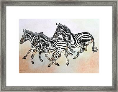 Desert Zebras Framed Print