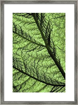 Design In Nature Framed Print by Aidan Moran
