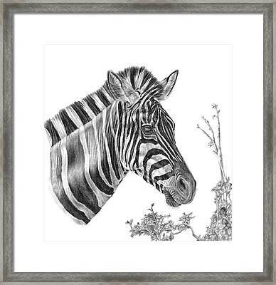 Designer Stripes Framed Print