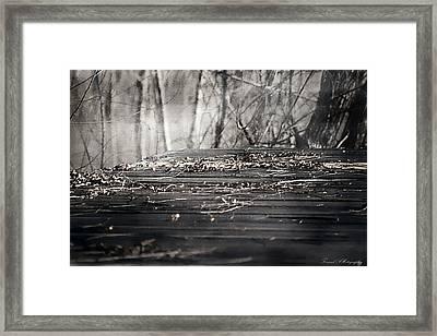 Destiny  Framed Print by Debra Forand