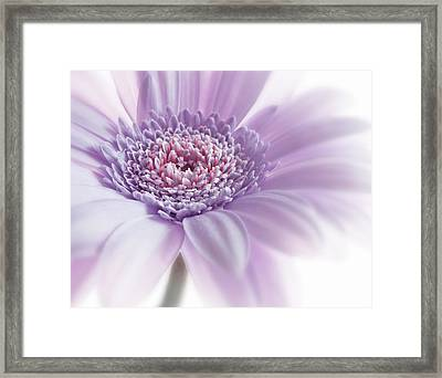Close Up White Pink Flowers Macro Photography Art Framed Print by Artecco Fine Art Photography