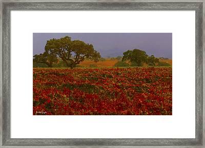 Detail Autumn Vineyard Santa Ynez California  Framed Print by Barbara Snyder
