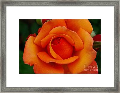 Framed Print featuring the photograph Detail In Orange by John S