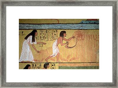 Detail Of A Harvest Scene On The East Wall, From The Tomb Of Sennedjem, The Workers Village, New Framed Print