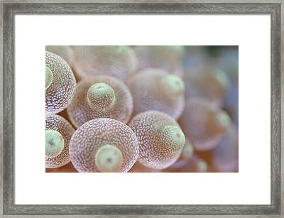 Detail Of Sea Anemone Framed Print by Scubazoo